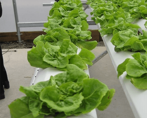 the hydroponic production process